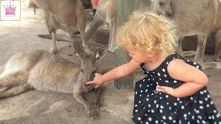 Парк Австралийских животных - парк кенгуру. Гладим и кормим кенгуру, козочек и попугайчиков.
