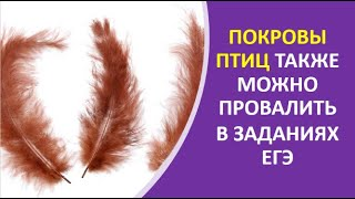 22. Покровы птиц также можно провалить в заданиях ЕГЭ
