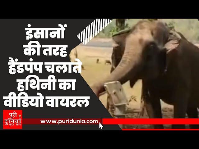 Elephant Viral Video: Rupa नाम की ये हथिनी कितनी चालाक है, ख़ुद देख लीजिए (puridunia)
