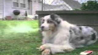 Крутой пёс