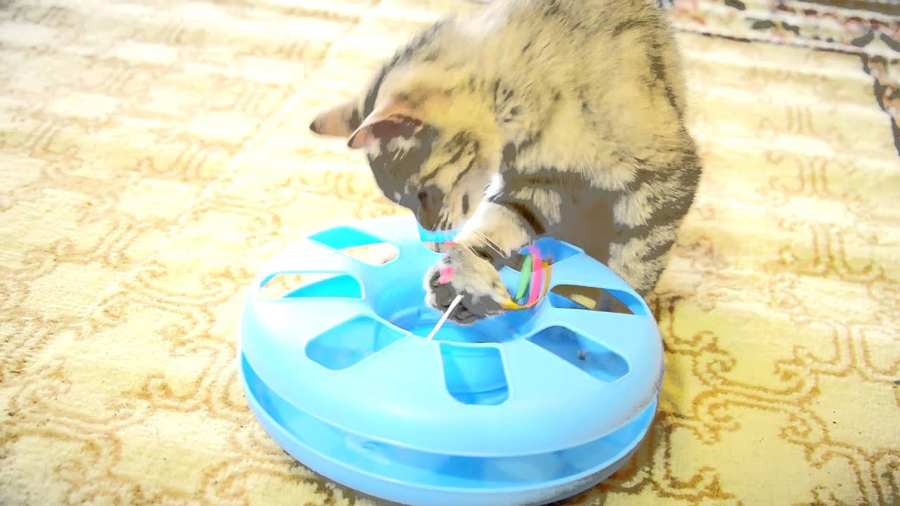 Cat Mouse Chaser Toy Wow Blog