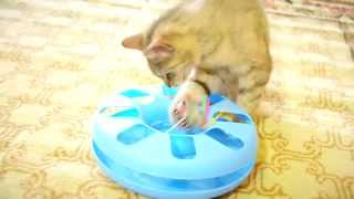 Assorted Cat Chaser Ball & Mouse Toy