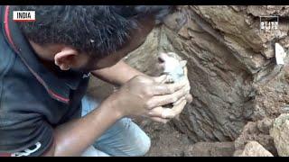 Cuccioli intrappolati sotto le macerie: cane chiama i soccorsi