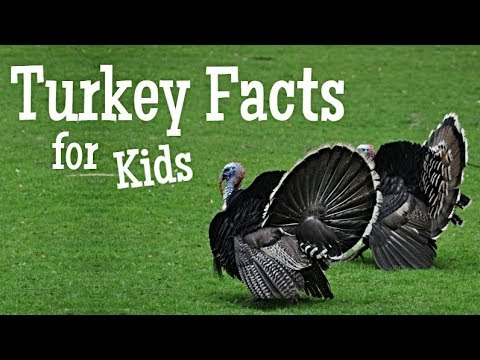 Turkey Facts for Kids