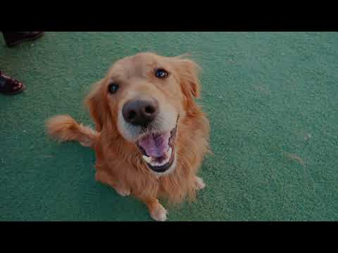 Meet Mo's Mutt: Charlee