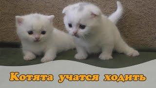 Котята учатся ходить ))