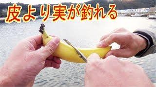 堤防から【バナナ】でイカや魚も釣れる