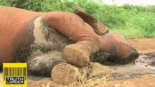 Elephant massacre in Kenya as poachers kill animal family - Truthloader