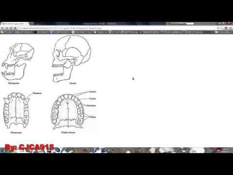 Wisdom Teeth ARE Vestigial Traits/Structures...