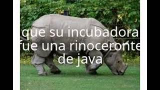 dinosaurio clonado:explicacion corta