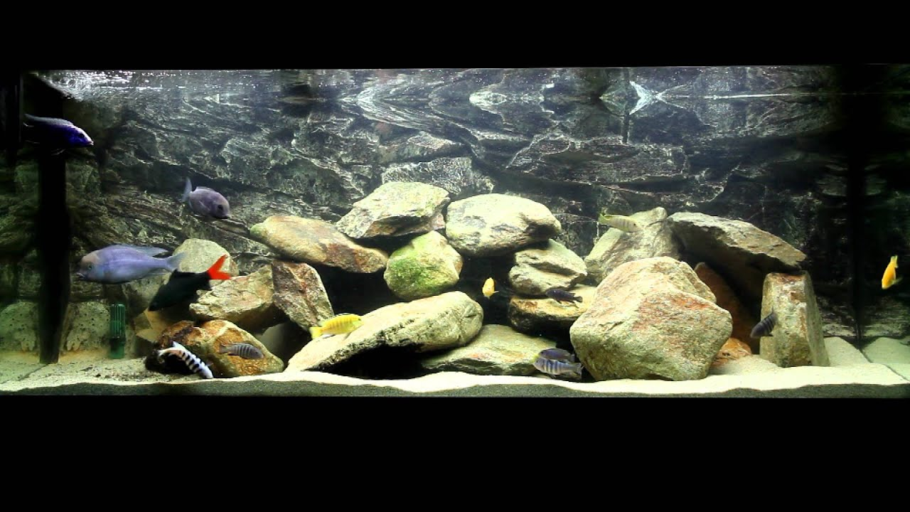 my juwel rio 400 liter malawi cichlids fishtank hd youtube. Black Bedroom Furniture Sets. Home Design Ideas