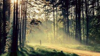Природа. Дикая природа под приятную музыку