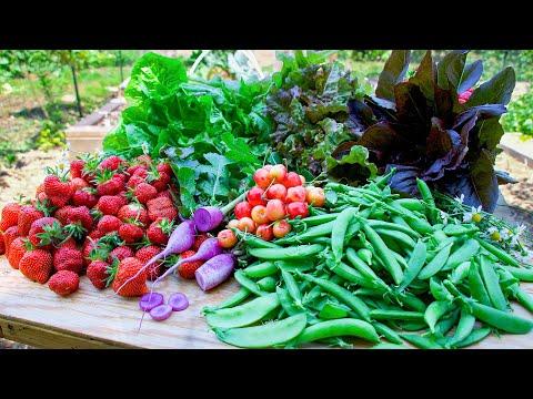Spring Backyard Gardening Harvest, Sustainable Permaculture Garden