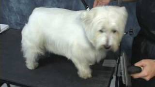 Grooming A Westie At Www.onlinegroomingschool.com! Take A Free Test Drive