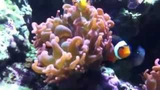 Coral Reef Documentary Season 1 Episode 2