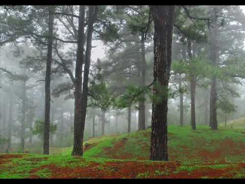 """LA ISLA DE LA PALMA """"La Isla Bonita"""" Canarias,   www.santossaul.com"""
