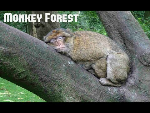 Trentham Monkey Forest | Stoke-on-Trent, England