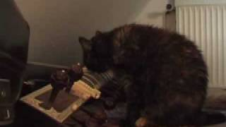 cat plays sitar - day and night