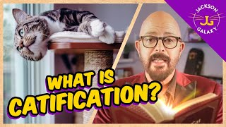 What is Catification and why it's crucial for your catloving home!
