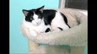 Kittens Scared Of Cat Tree & Kitten Closet Gates Come Down - Nursery #36