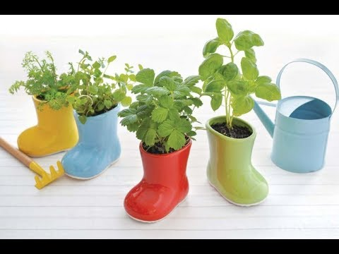 Самый экономный и простой способ выращивания зелени на подоконнике