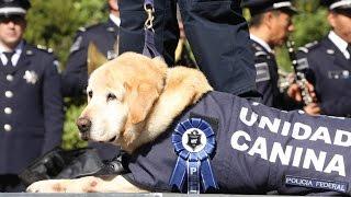 Policía Federal jubila a perros policía