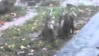 Happy Bouncing Otters - Free Funny Videos Download.flv