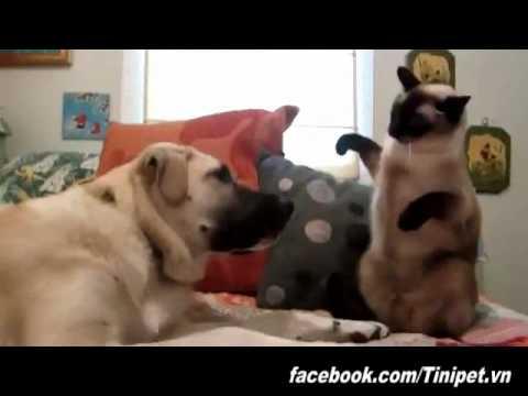 Mèo đánh chó