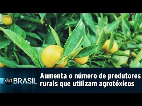 Aumenta o número de produtores rurais que utilizam agrotóxicos   SBT Brasil (26/07/18)