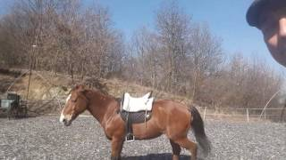 Free Horse Style - A világ legjobb szakmája :)