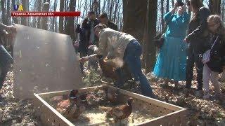 В экопарке в Харьковской области выпустили фазанов