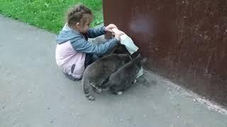 Кормим бездомных кошек