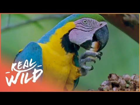 Creatures Of The Magic Water [Amazon Wildlife Documentary] | Real Wild