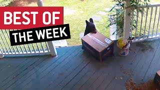 BEST OF THE WEEK - Porch Pirate