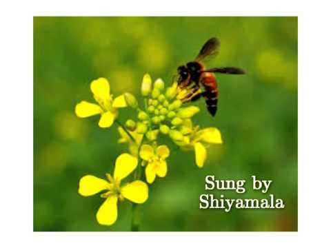 vizhigal meeno song