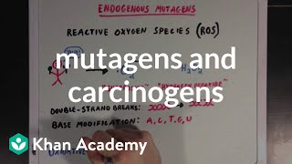 Mutagens And Carcinogens | Biomolecules | Mcat | Khan Academy