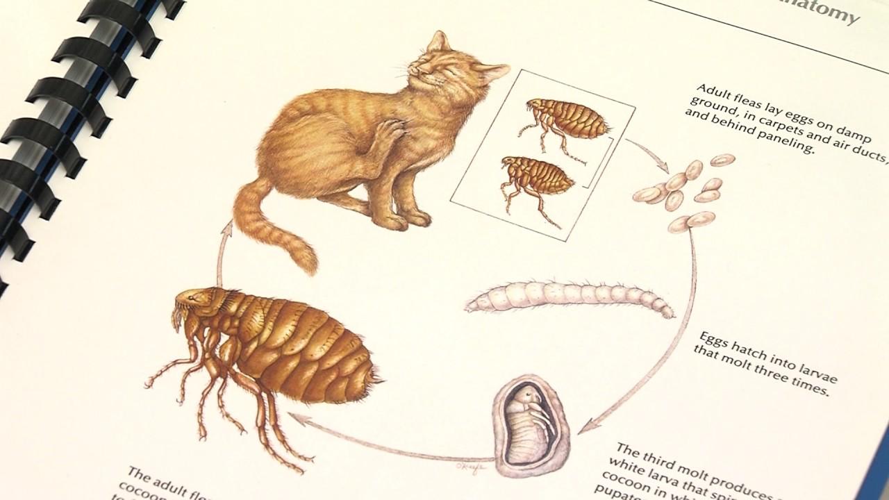 zunanji paraziti hpv negatif et condylome
