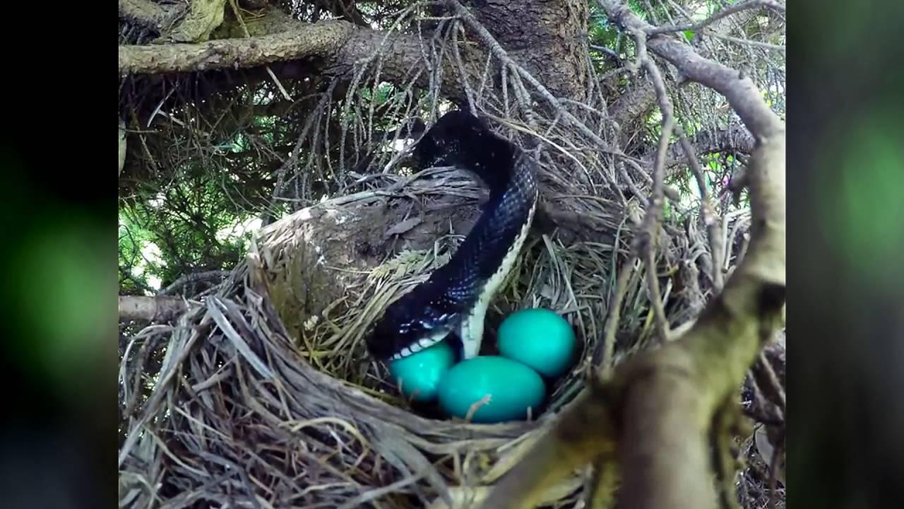 Download Snake Eats Eggs
