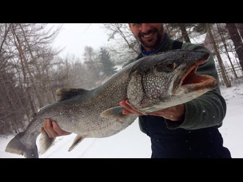 Jigging Lunker Lake Trout From Lake Champlain