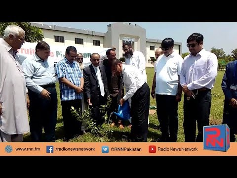 Tree Plantation in Quaid e Azam University | Radio News Network | Mubashir Malik