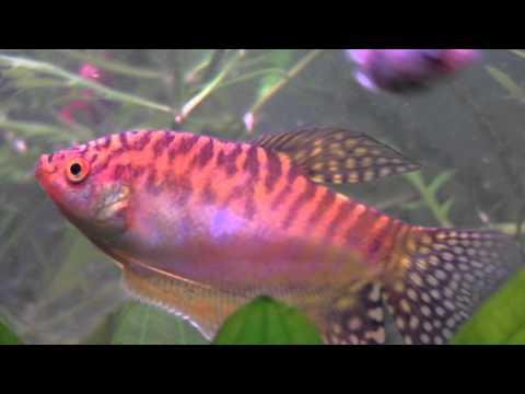 Tropical Fish Slideshow