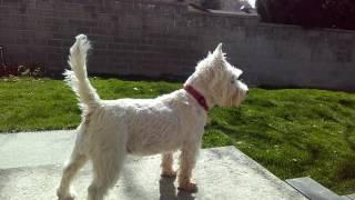 Doggo does a bork