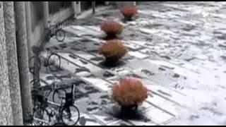 Difunden video de atentado en Noruega