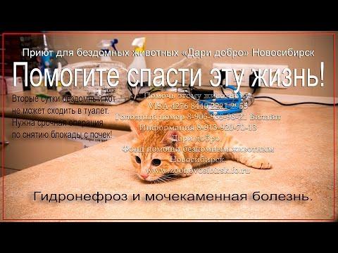 Отзывы о работе в банке «Русский Стандарт»  