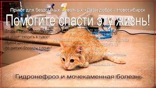 Гидронефроз у кота | Мочекаменная болезнь | Спасаем кота | help the cat
