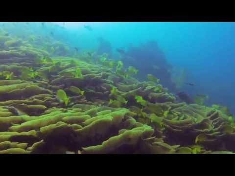 Plongées en Nouvelle Calédonie et au Vanuatu
