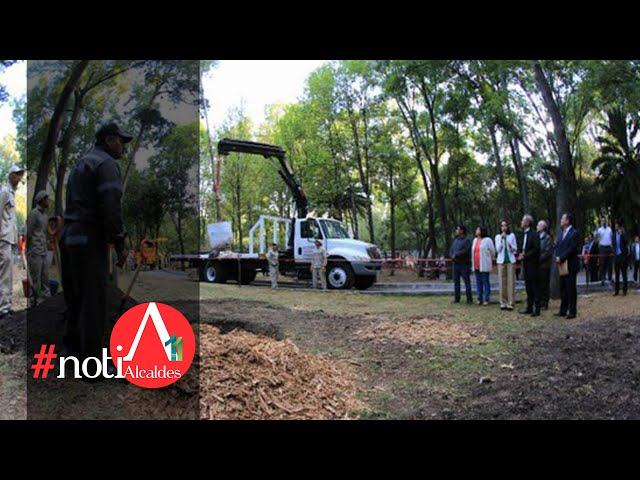 NotiAlcaldes: Reforestación en la CDMX, solución ante inundaciones