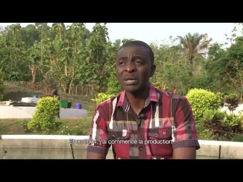 Spiruline du Togo