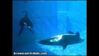 When the Orcas Aren