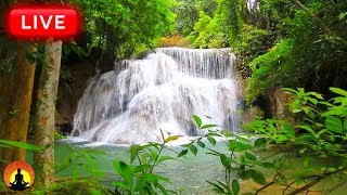 🔴 Healing Frequency 24/7: Forest Waterfall Meditation Music
